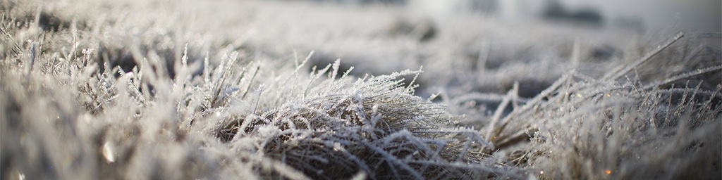 image-sub-zero-antifreeze-frosty-grass-field