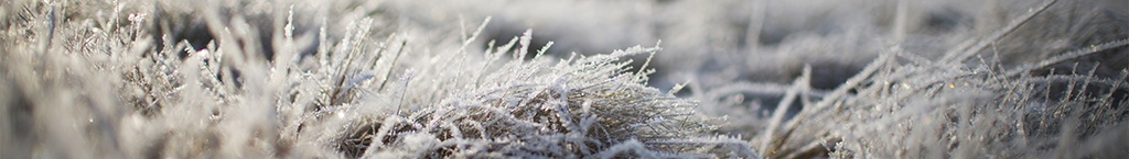Frost Alert - Is it going to freeze tonight?