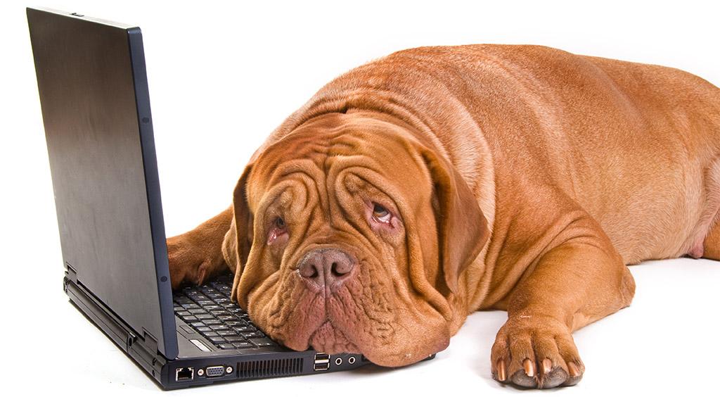image-sad-dog-laptop-404-error